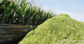 Premium Quality Corn Silage For Sale