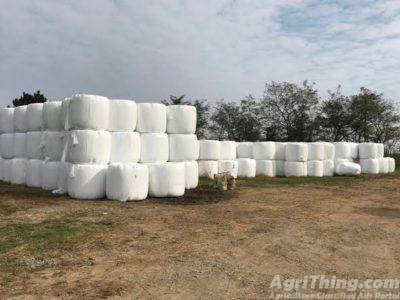 export quality silage available in 80 kg bales
